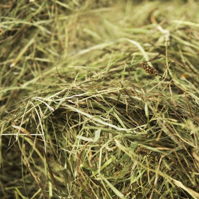 Haylage, Hay and haynets